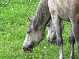 Pferde -  Bild: Franz Walter